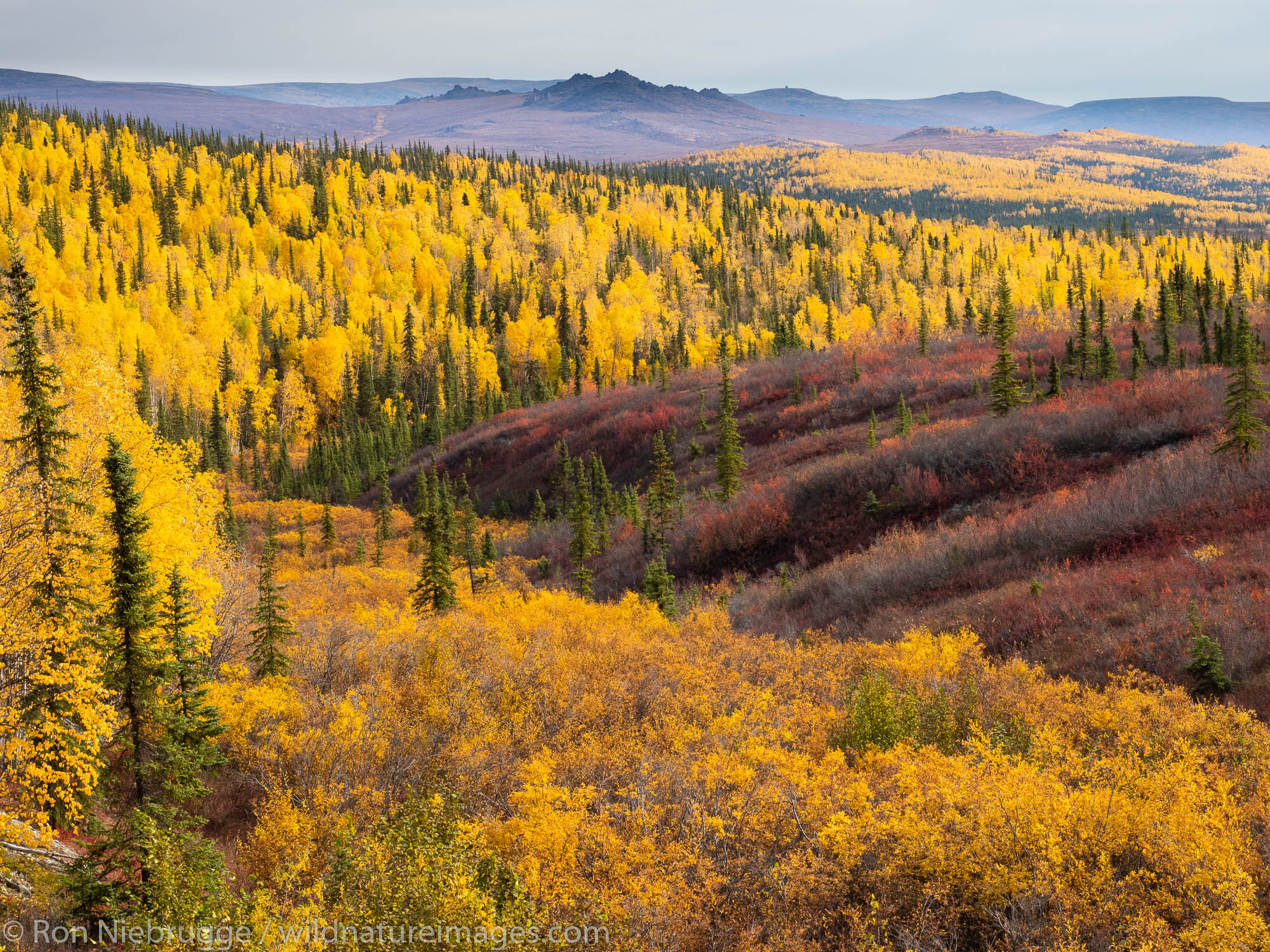 Autumn, Brooks Range, Arctic Alaska.