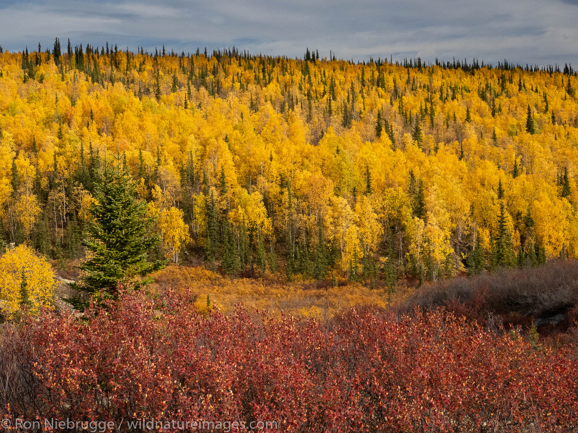Autumn Brooks Range Arctic Alaska.