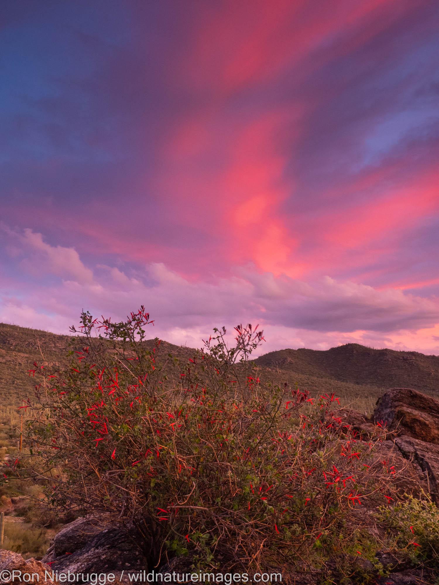 Sunset, Tortolita Mountains, Marana, near Tucson, Arizona.