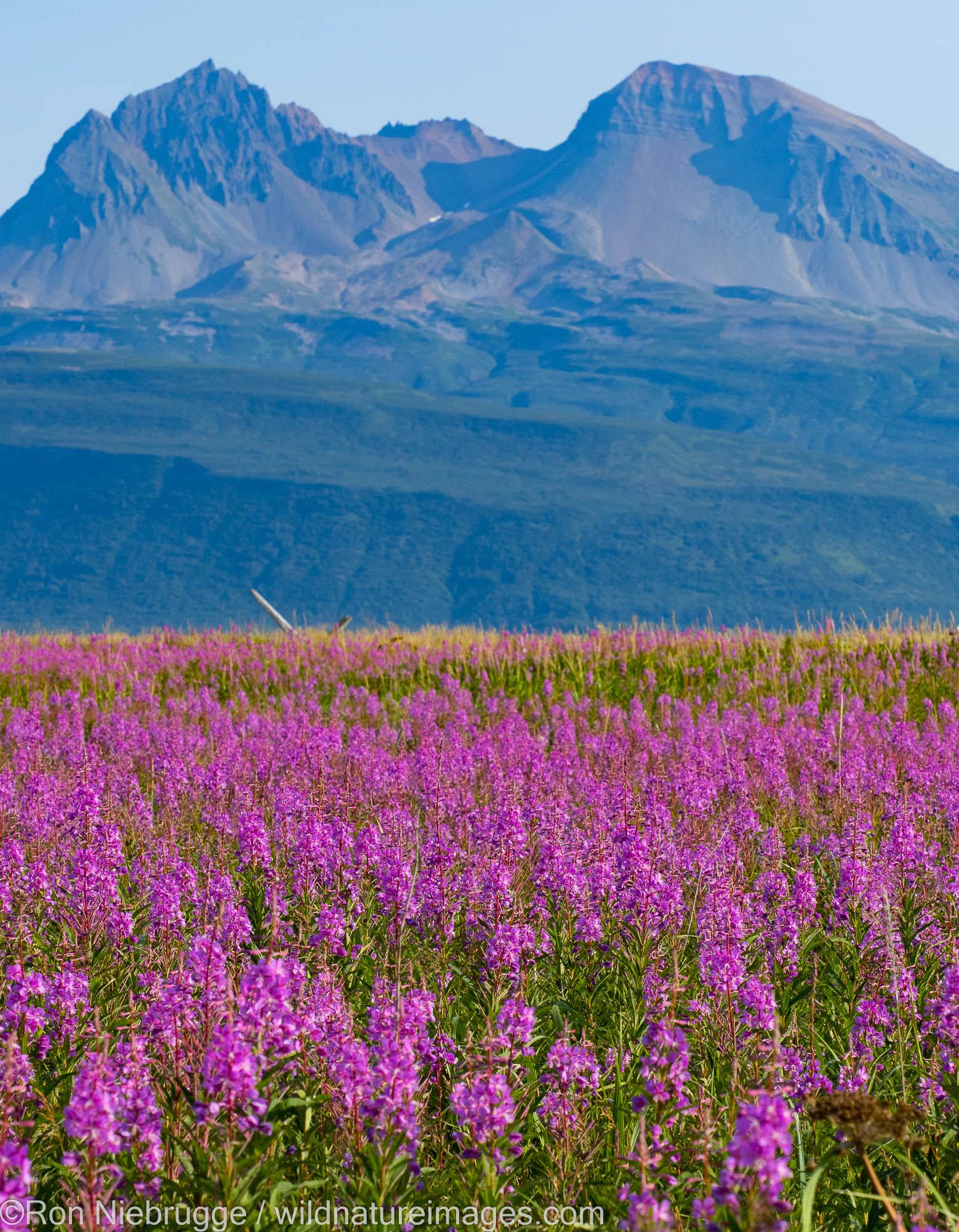 Hallo Bay, Katmai National Park, Alaska.