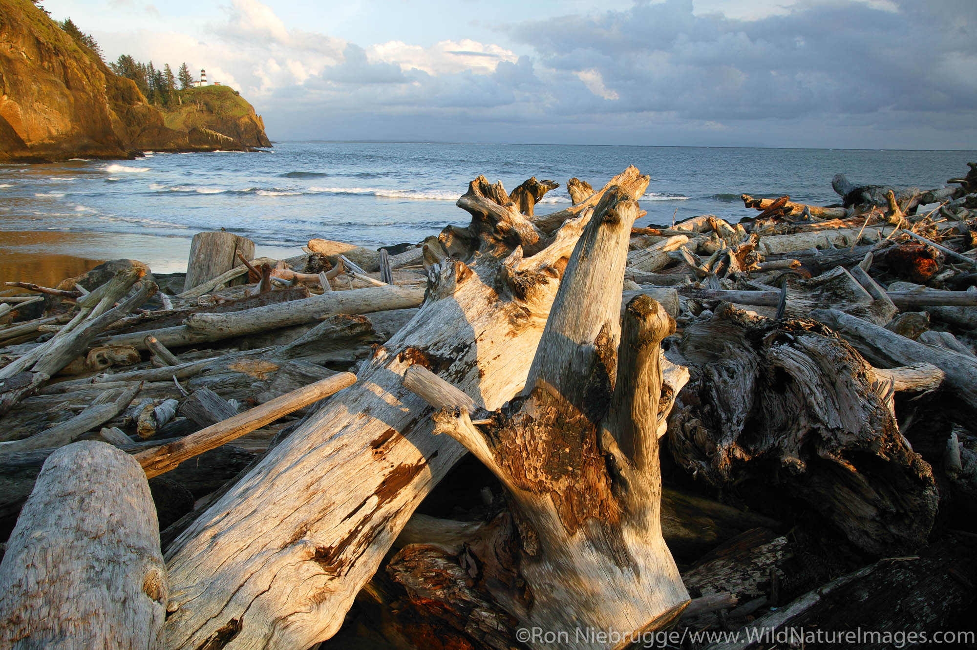 Driftwood on Beach at the mouth of the Columbia River.  Cape Disappointment Lighthouse in distance.  Cape Disappointment State...