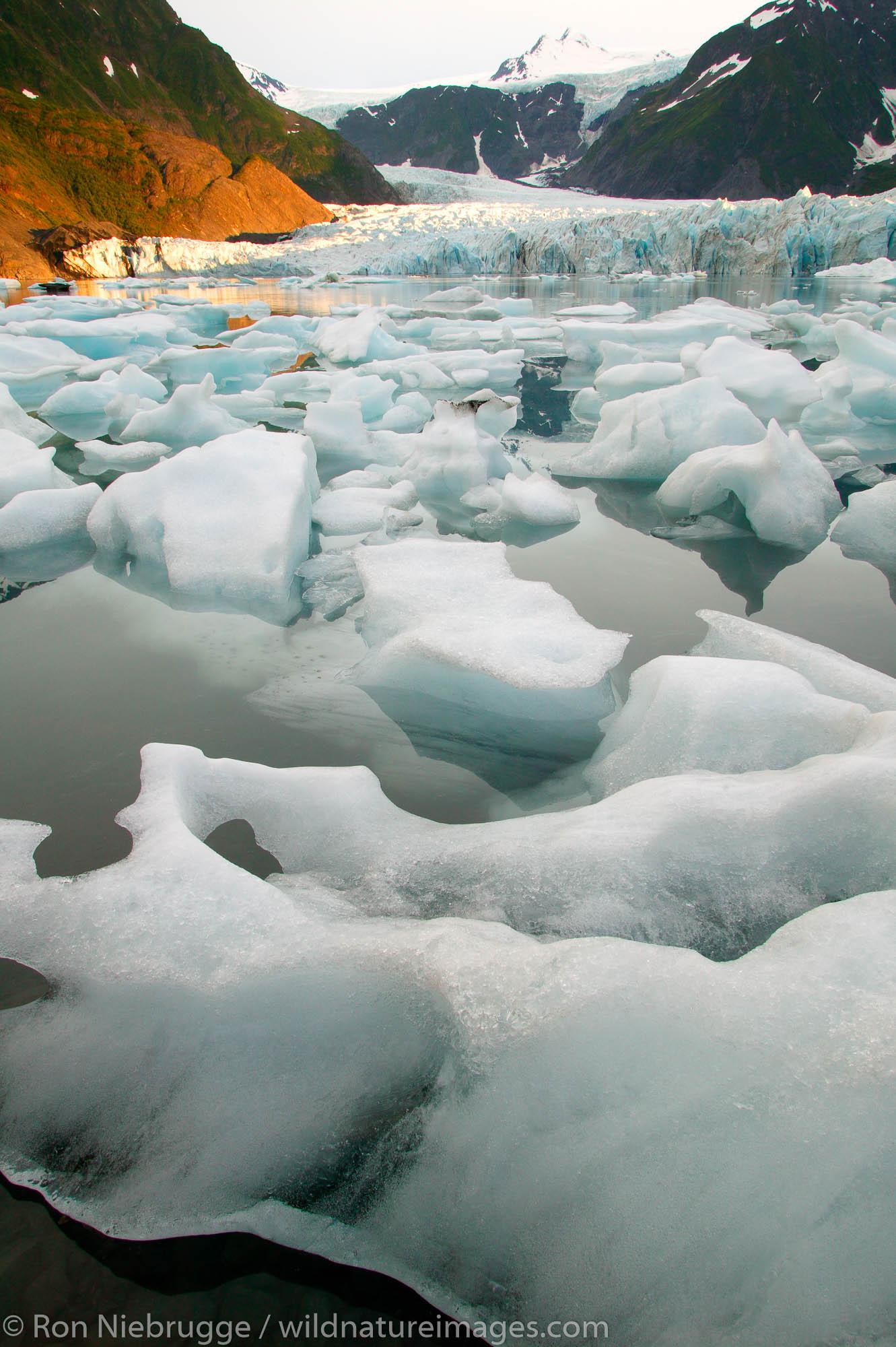 Pederson Glacier and Lagoon, Aialik Bay, Kenai Fjords National Park.