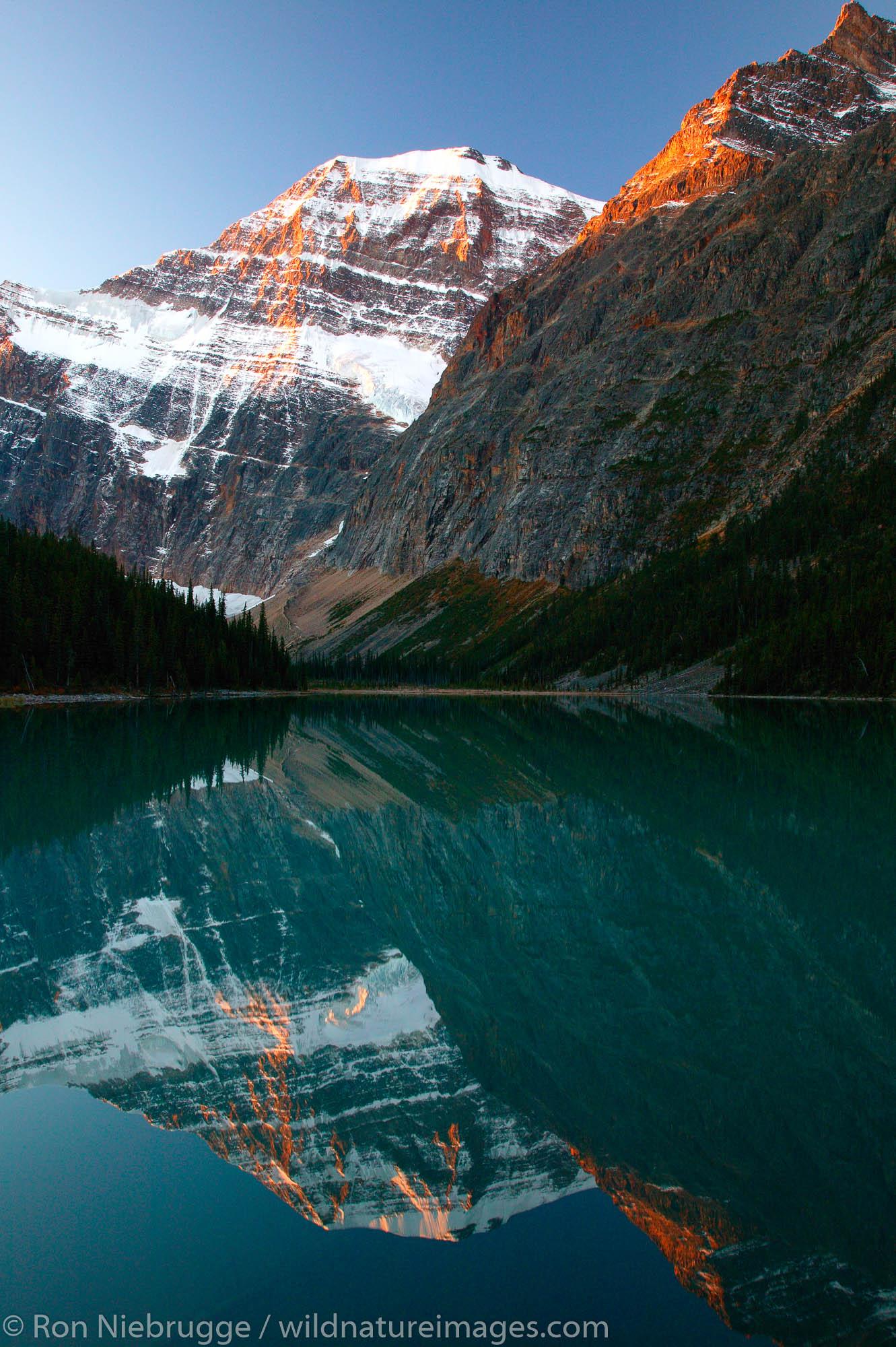 Mt. Edith Cavell reflects into Cavell Lake, Jasper National Park, Alberta, Canada.