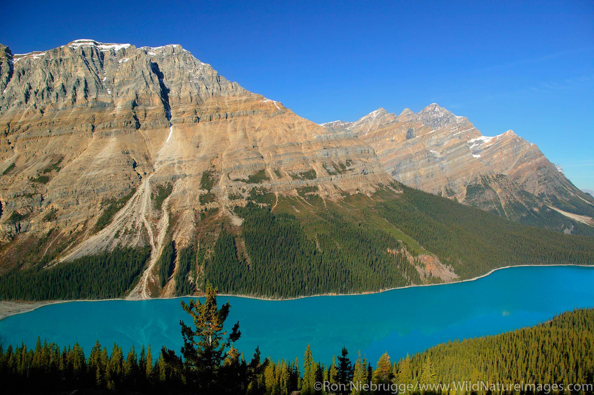 Peyto Lake at Bow Summit, Banff National Park, Alberta, Canada.
