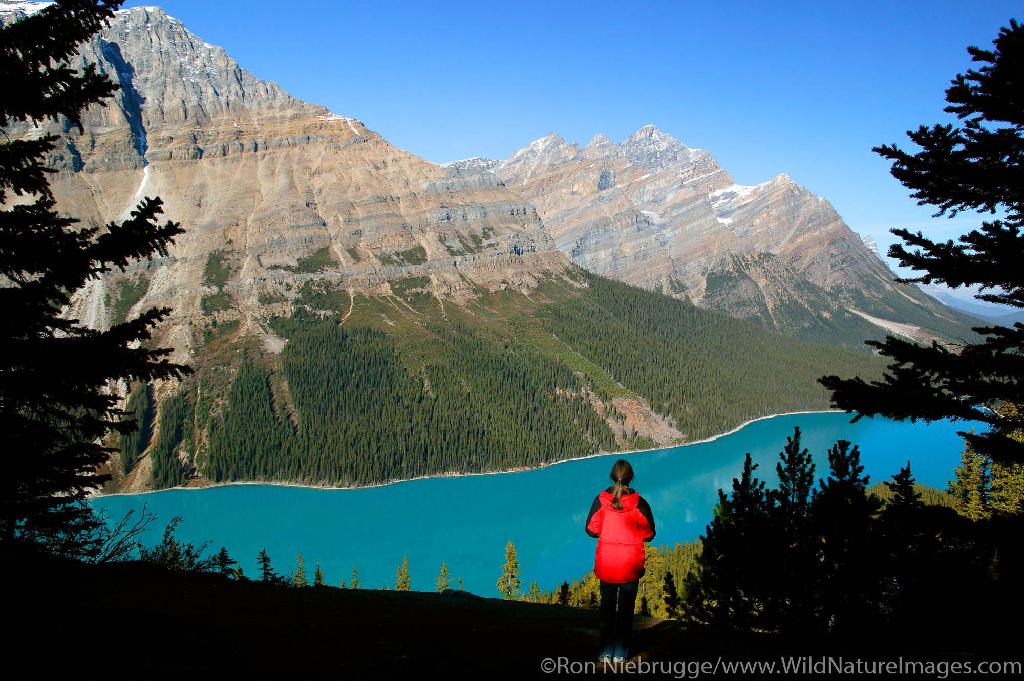 Visitor (MR) views Peyto Lake at Bow Summit, Banff National Park, Alberta, Canada.  Model Released.