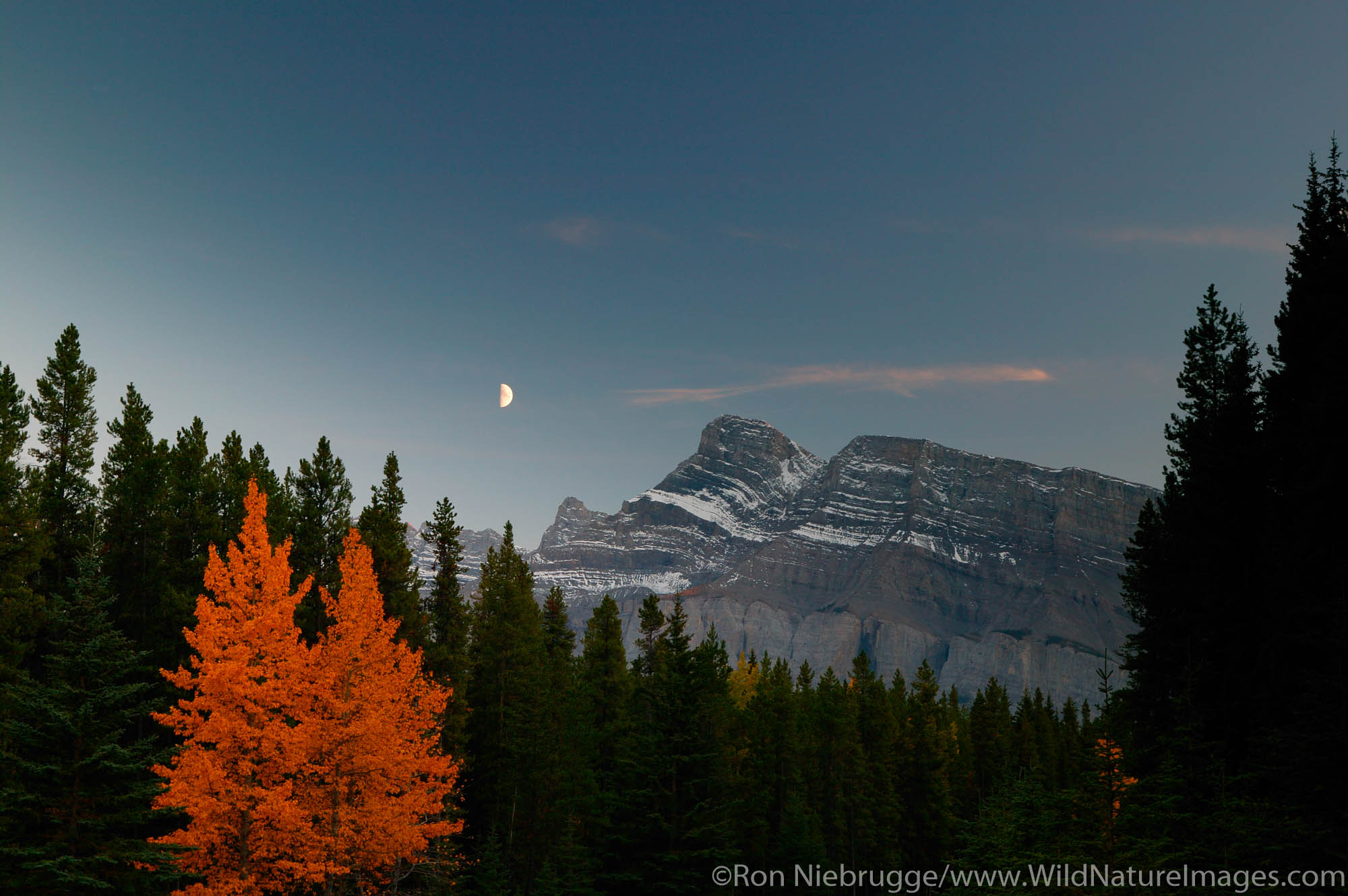 Fall colors and moon in the evening, Banff National Park, Alberta, Canada.