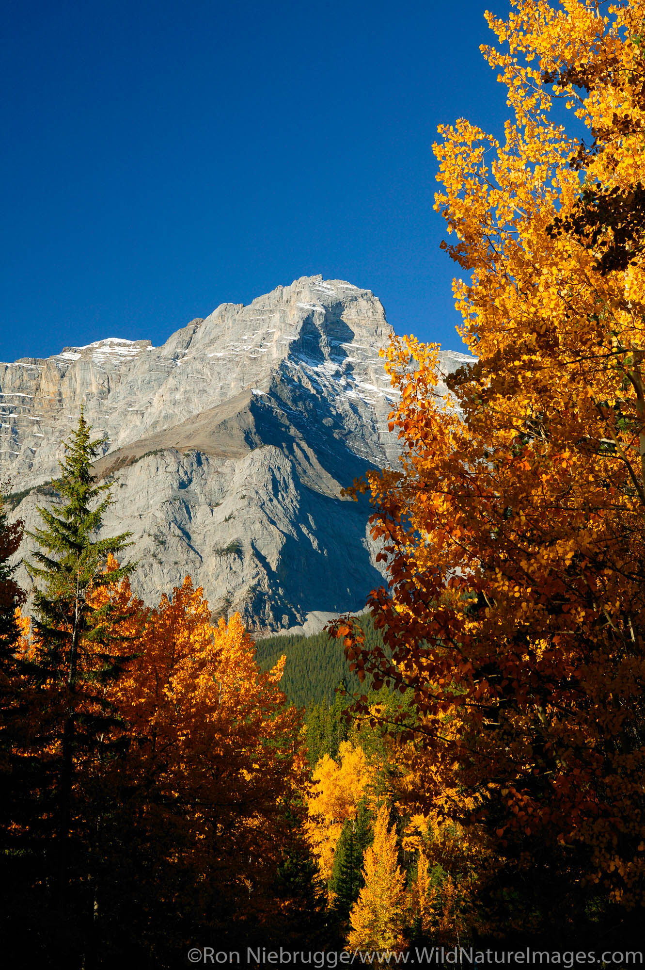 Fall colors and Cascade Mountain (2,997 m) from the Minnewanka Loop, Banff National Park, Alberta, Canada.