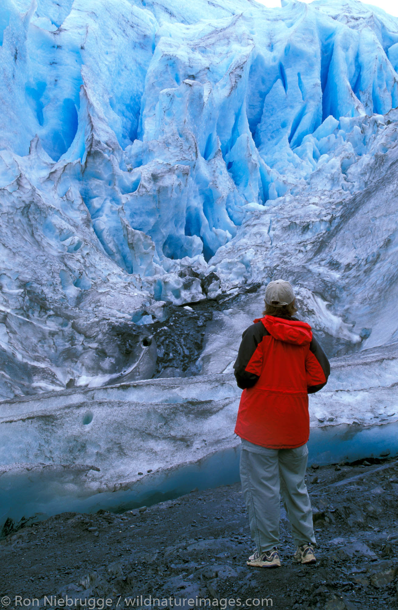 Lady (mr) viewing Exit Glacier, Kenai Fjords National Park, Alaska.