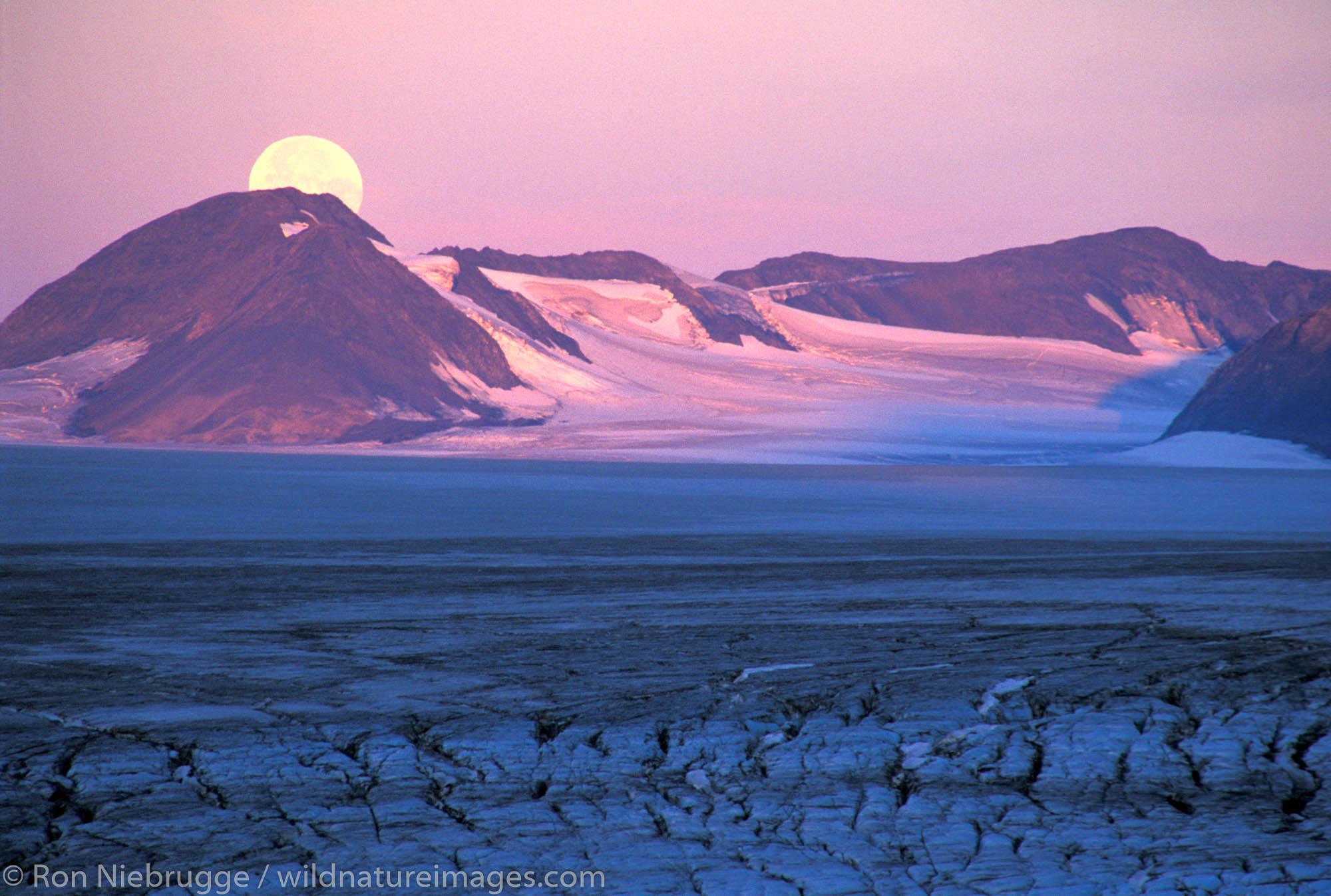 Moon setting at sunrise on the Harding Icefield, Kenai Fjords National Park, Alaska.