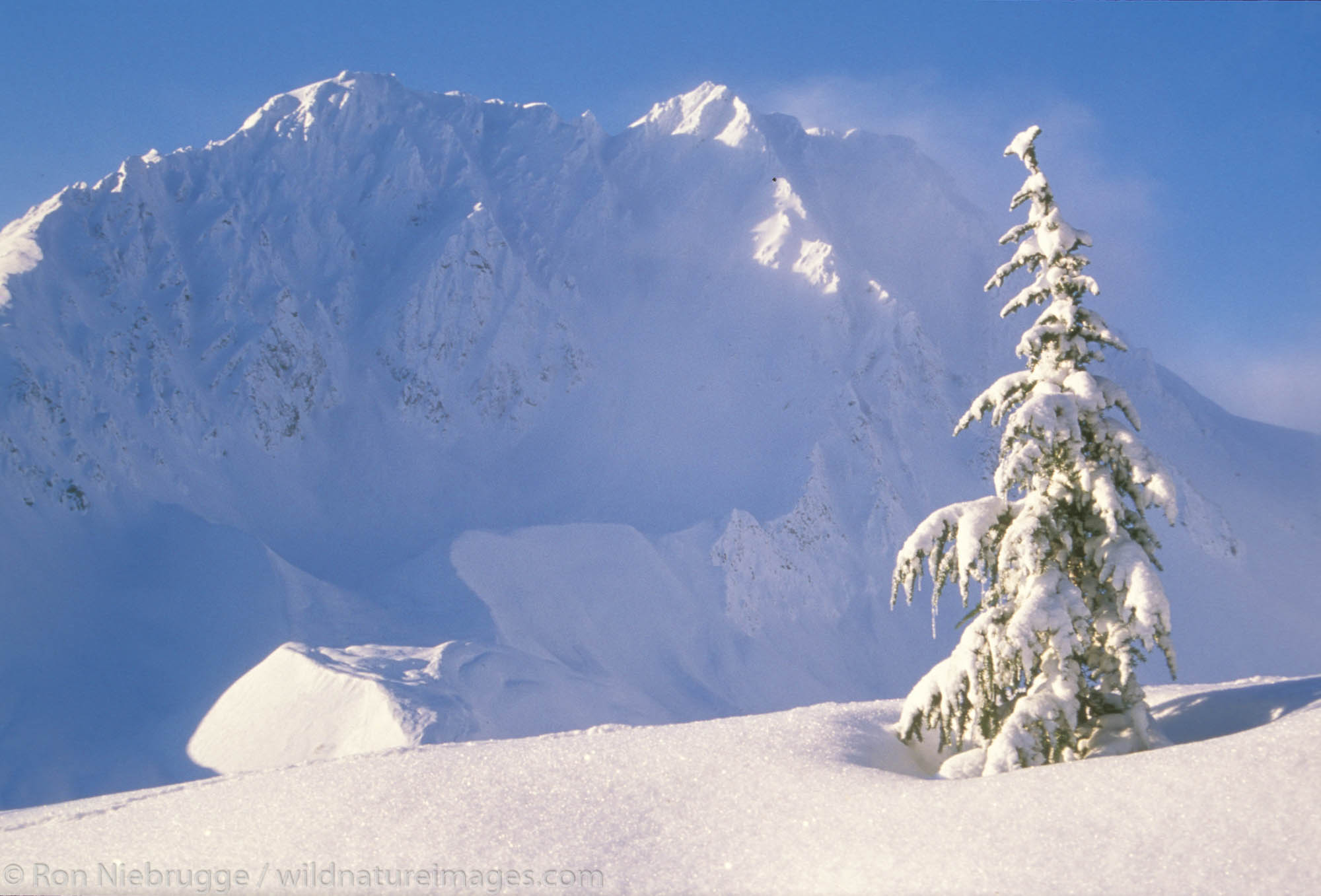 A small tree during winter in the Chugach National Forest, near Seward, Alaska.
