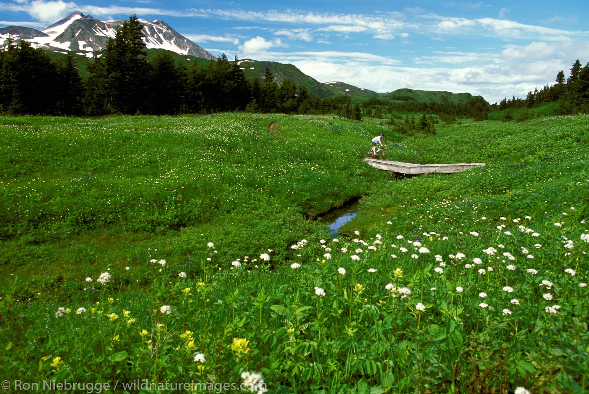 Mountain biking on the Lost Lake Trail, Chugach National Forest, near Seward, Alaska.