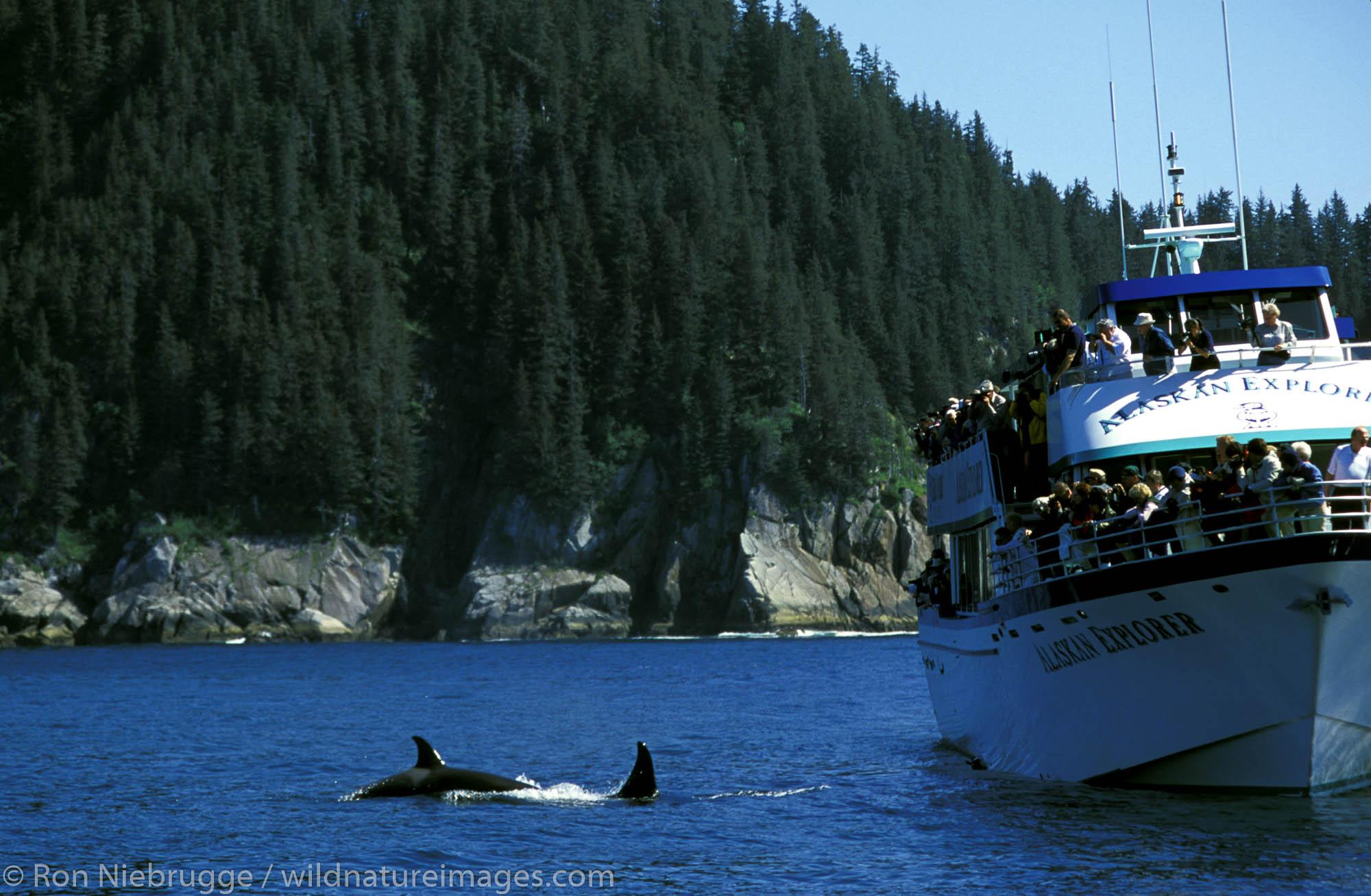 Vistitors watch Orcas, Kenai Fjords National Park, Alaska.