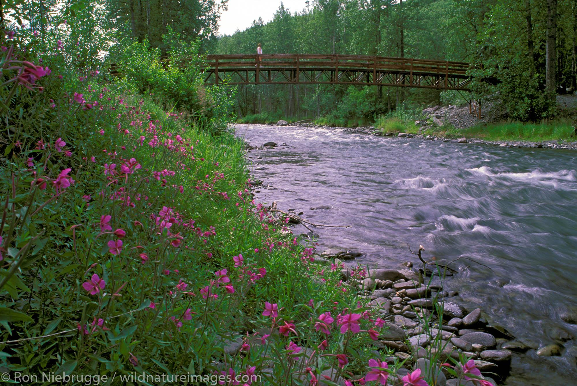 Bridge over Resurrection Creek on the Resurrection River Trail, Chugach National Forest, near Hope, Alaska.