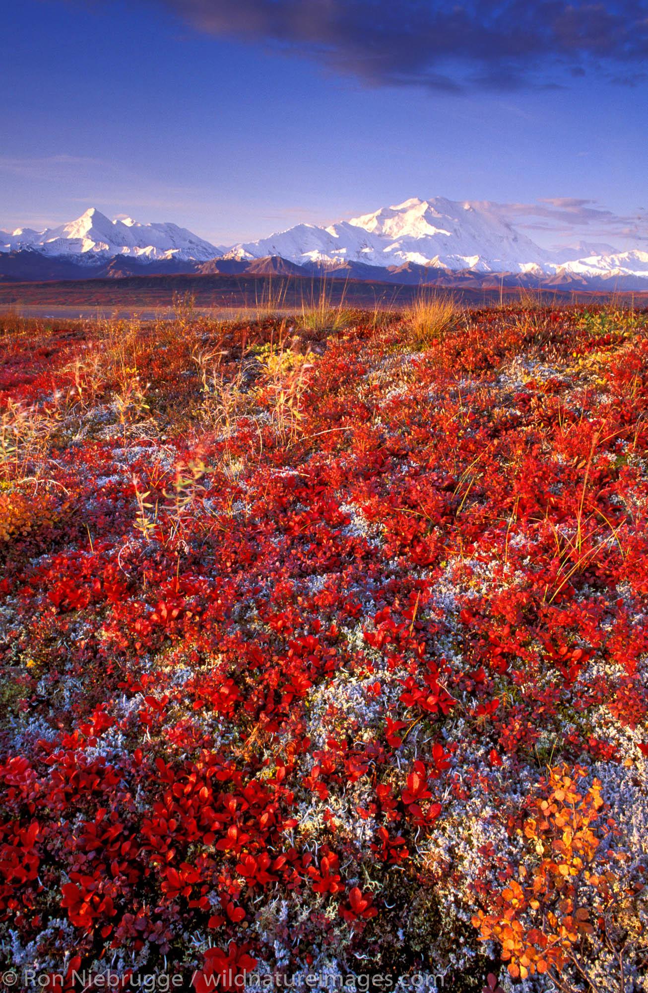 Mt McKinley in the Fall, Denali National Park, Alaska.