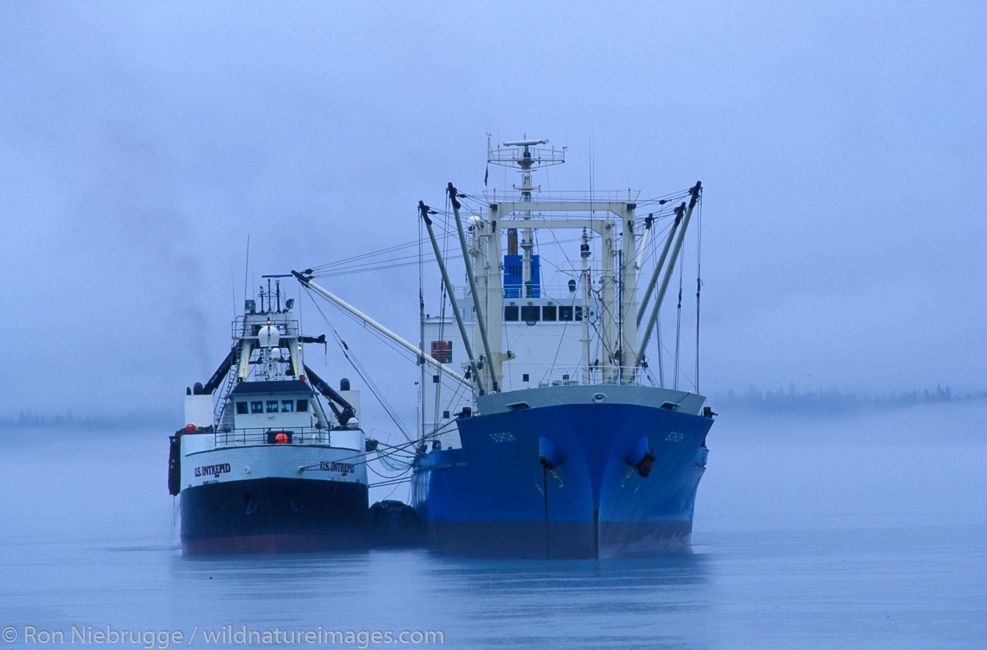 The US Intrepid unloading fish on to the tramper Sohoh, in Resurrection Bay, Seward, Alaska.